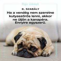 Mopsz szabályok - a békés együttélésért vagyis a mopsz kényelméért Pitbull, Dogs, Buldog, France, Pit Bull, Pet Dogs, Doggies, Pit Bulls, Pitbulls
