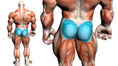 Want to look damn good? Want to amplify athleticism? Then train the glutes directly. Here's how to do it while protecting the low back.