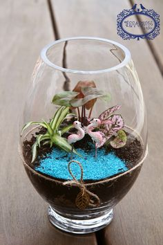 """Terrarium """"Aloha"""" with Syngonium, Ribbon Plant and Polka Dot Plant. Follow Terrariums by Adele on Facebook and Instagram."""