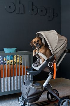 forget the room or the stroller. that's a PUGGLE in the stroller. Dog Stroller, Baby Strollers, Spearmint Baby, Room Tour, Baby Boy Nurseries, Boy Room, Nursery Room, Nursery Ideas, Kids Bedroom