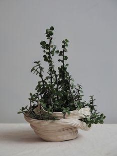 Ceramic with Portulacaria Afra  | Zhu Ohmu