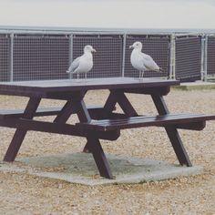 Hastings 2015....