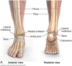 Shin splints are probably a runner's worspottst nightmare!! I know they are mine, and I struggle when they attack! But there are different kinds of shin splints pain. There is anterior and posteri…
