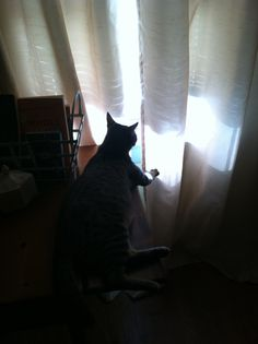 Spying on the birds