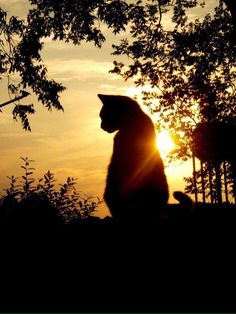 "I sense a majestic peace in the regal of my cat against the sun. My sister entitled the picture ""perfect moment"". Beautiful Cats, Animals Beautiful, Cute Animals, Crazy Cat Lady, Crazy Cats, I Love Cats, Cool Cats, Kittens Cutest, Cats And Kittens"