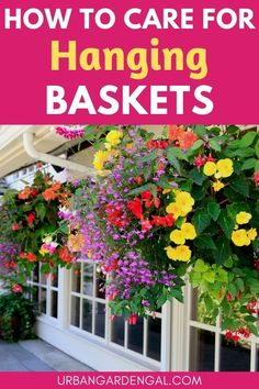 Hanging baskets filled with annual flowers look stunning hanging from porches or verandas and with the right care your hanging flower baskets can bloom from spring right throughout summer. #flowers #flowergarden #hangingbaskets Hanging Flower Baskets, Annual Flowers, Garden Beds, Perennials, Planting Flowers, Canning, Perennial, Conservation