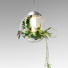 The bottom of the globe is covered in pumice that is rich with nutrients for your future plants and retains tons of water so you only have to water your plants every 3 weeks. This device can be used for lighting, air cleaning and air humidifying.