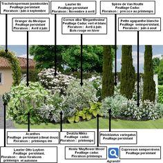 Créer un massif d'arbustes vert et blanc :