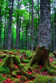 Hayedo de Aralar, Navarra (la Sierra de Aralar también se extiende por Guipúzcoa, País Vasco), España. Nature Images, Nature Pictures, Wonderful Places, Beautiful Places, Greek Goddess Art, Pamplona, Old Trees, Basque Country, Places Of Interest