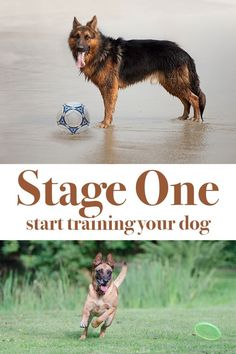 Dog Obedience Training Stage One is the very first stage in dog training. Find out how it works - Stage One is the very first stage in dog training. This is the 'Get It' stage of my 'Get It', 'Pair It', 'Teach It' dog training system. Dog Training Classes, Training Your Puppy, Dog Training Tips, Training Online, Potty Training, Agility Training, Training Academy, Training Quotes, Training Schedule