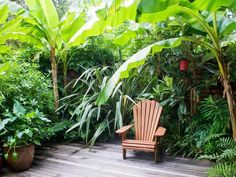 Tropical Garden is very popular in Asia. The highlight of this garden is the refreshing atmosphere. You can create your backyard to this tropical style. Small Tropical Gardens, Small Courtyard Gardens, Small Courtyards, Small Gardens, Outdoor Gardens, Courtyard Design, Tropical Plants Uk, Modern Gardens, Mini Gardens