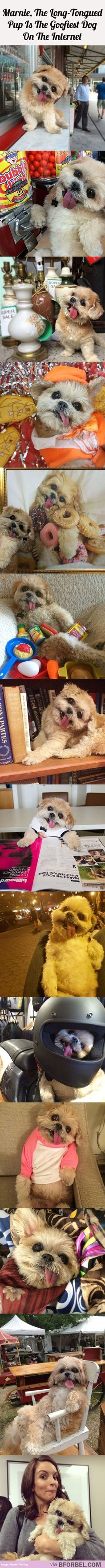 14 Images Of Marnie, The Goofiest Dog On The Internet That'll Make Your Day…