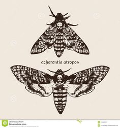 Illustration about Vector hand drawn Deaths head hawk moths illustration. Signature is the Latin name of the species. Illustration of gothic, butterfly, beauty - 61948952 Eye Tattoo Meaning, Tattoos With Meaning, Butterfly Eyes, Butterflies, Illustration Papillon, Hand Tattoos, Flower Tattoos, Tatoo, Things To Draw