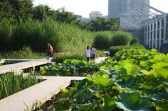 Zhongshan-shipyard-park-turenscape-19-the-terraced-lake-edge « Landscape Architecture Works | Landezine