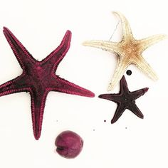 Dyeing starfish that washed up after Storm Emma!