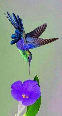 Hummingbird Pictures, Hummingbird Tattoo, Exotic Birds, Colorful Birds, World Birds, Landscape Pictures, Little Birds, Pictures To Paint, Hummingbirds