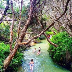 This paradise totally exists! Eli Creek on Fraser Island, Australia Coast Australia, Queensland Australia, Australia Travel, Fraser Island Australia, Melbourne Australia, Places To Travel, Places To See, Places Around The World, Around The Worlds