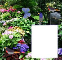 Fotomontagem lydiana - Pixiz Frame, Plants, Photomontage, Animals, Picture Frame, Plant, Frames, Planets