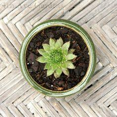 green flower & wood chevron