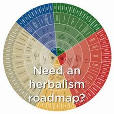 The Herbalist's Path- Ever feel overwhelmed when deciding which herb to use? Check out this blueprint to understanding herbs