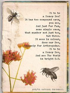 NATURAL GEODESIC Fine Art Print - 290 gsm Hahnemühle Bamboo The honey bee has two compound eyes that resemble geodesic domes. Bee Poem, Best Science Books, Bee Quotes, Old Typewriter Font, Buzzy Bee, I Love Bees, Bee Friendly, Bee Art, Save The Bees