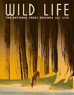 Wild Life, WPA Poster; avahttp://www.freevintageposters.com/2012/12/wild-life-national-parks-preserve-all.html