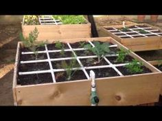 Square Foot Gardening, Garden Ideas, Gardening Things, In The Garden, Gardening Growing, Irrigation Grids, Drip Irrigation, Foot Gardens, Irrigation Systems
