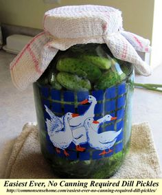 Refrigerator dill pickles made with a vinegar brine. No canning required dill pickles, crisp, delicious and easy. The best pickles you will ever make. http://texastitos.com