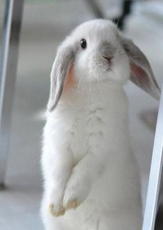 bunnies are personable, attentive, affectionate and a good pet for someone willing to invest the time. They are NOT an Easter decoration
