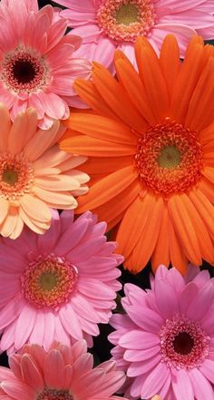 Обои wallpapers iPhone flowers