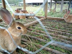 Build Your Own Rabbit Hutch / The ReadyBlog#  I'd add if you live where there are foxes bury re-barb criss-crossed and welded in he ground to keep fox burrowers from coming up and eating your bunnies.  Foxes are pretty strong and might bite http://www.thereadystore.com/diy/9778/build-your-own-rabbit-hutch/#through wooden stick frame bottom of hutch.
