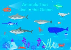 Eduka's World is an English learning app for kids ages 2-10, and best of all, it's 100 free to play! Your kids will have while learning English! Download today for free. Available on the App Store and Google Play Store! Animals Name In English, Underwater Animals, Learning English, 100 Free, App Store, Google Play, Shark, Names, Ocean