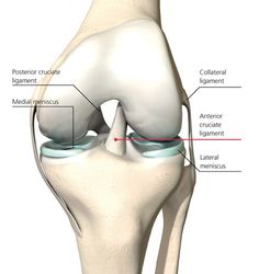 """The knee joint is known as a """"modified hinge joint"""" due to its ability to rotate slightly (which all practitioners should try to avoid). The joint at t"""