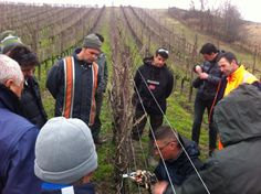 Oggi il progetto #potatura continua sul cordone speronato. #gavi #Piemonte  di Davide Ferrarese