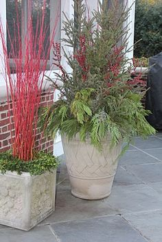 Doorstep planter for red hses