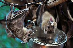 Bats enjoying breakfast by Sikaris on DeviantArt