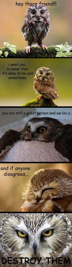 Owl's inspirations