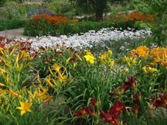Design the perfect perennial garden with basic planning tips from DIY experts.