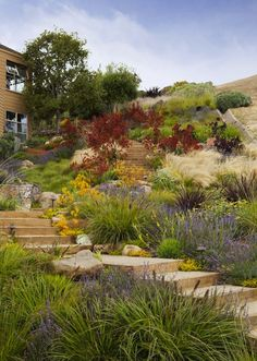 Vote for the Best Professional Landscape Project in the Gardenista Considered Design Awards Tiburon Hillside - contemporary - landscape - san francisco - Arterra LLP Landscape Architects