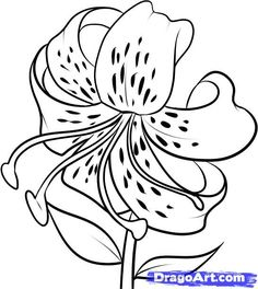 Tiger Lily Coloring Pages Drawing Lessons, Art Lessons, Drawing Ideas, Drawing Guide, Sketch Ideas, Plant Drawing, Painting & Drawing, Lilies Drawing, Doodle Drawing