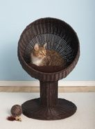 modern cat bed.  Another thing I wish I had :)