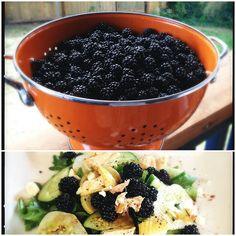 Blackberry, chicken, and feta salad #seattle #foodporn