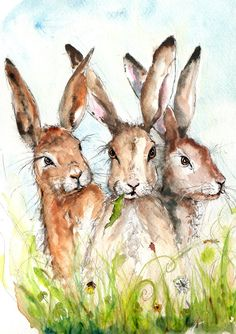 Hare Print- Illustration Painting - Watercolor Art Print print set in amount-hare, farm, ani Hare Pictures, Rabbit Pictures, Animal Paintings, Animal Drawings, Easter Paintings, Watercolor Animals, Watercolor Paintings, Watercolours, Hare Illustration