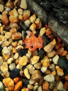 """""""One Orange Leaf"""" © 2017 RC deWinter ~  A lone red oak leaf lies on a bed of colorful gravel by a curb in the late afternoon sunlight. Available as wall art in a variety of media, sizes and configurations.  Pinterest prices inaccurate."""