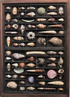 """Seashell art in a printer's box. $360.00, via Etsy.    A printer's box, drawer or tray is altered, stained and used to display a shell collection from around the world. Shells are beautifully arranged and cut if needed to be framed within the box.  Woodworking and shell cutting skills are combined with a knowledge of art and composition. The matching frame in this box has glass. Larger compositions have plexiglass. Dimensions vary. This one is about 18"""" x 24"""" high. Ready for hanging."""