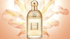 Guerlain Lys Soleia from Perfume Shrine: fragrance review