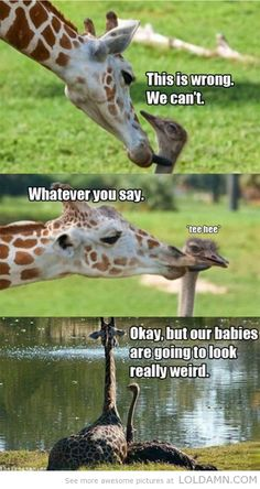 This is so wrong,baby…giraffe and ostrich