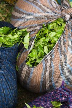 Tea Leaves, Kerala