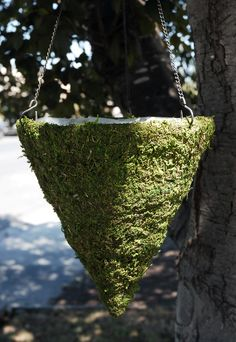 Another great find on Moss Cone Hanging Basket by Save On Crafts Moss Table Runner, Mosses Basket, Cheap Baskets, Wood Hooks, Wedding Arbors, Save On Crafts, Ceremony Decorations, Outdoor Decorations, Hanging Baskets