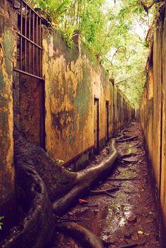 Dark Roasted Blend: The Trees Are Escaping!  Abandoned Prison in French Guiana